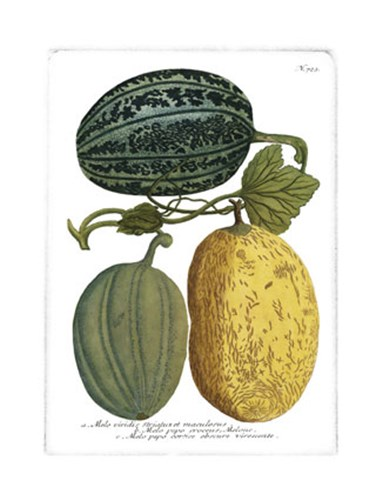 Antique Melons I Poster by Johann Wilhelm Weinmann for $21.25 CAD