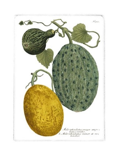 Antique Melons II Poster by Johann Wilhelm Weinmann for $21.25 CAD