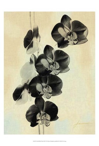 Orchid Blush Panels III Poster by James Burghardt for $21.25 CAD