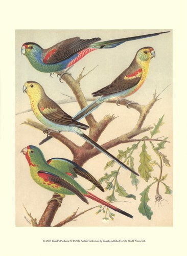 Parakeets IV Poster by Cassell for $13.75 CAD
