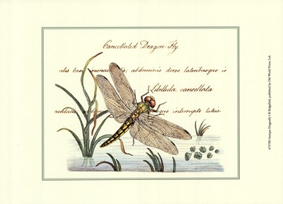 Antique Dragonfly I Poster by Unknown for $12.50 CAD