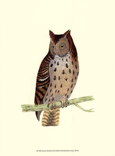 Mottled Owl Poster by Tom Morris for $13.75 CAD