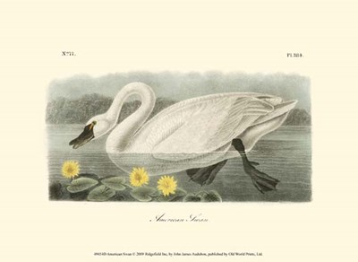 American Swan Poster by John James Audubon for $13.75 CAD