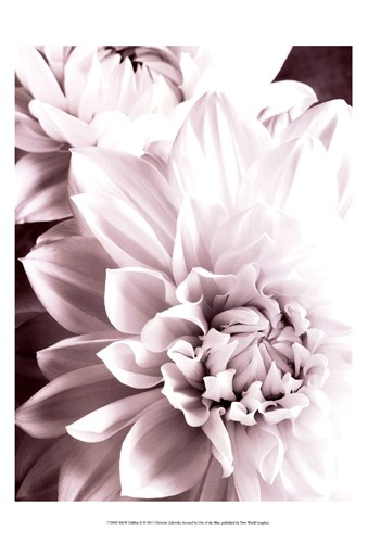 B&W Dahlias II Poster by Christine Zalewski for $21.25 CAD