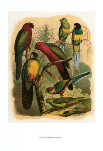 Tropical Birds II Poster by Cassell for $21.25 CAD