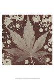 Botany Expressions IV
