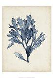 Seaweed Specimens II