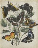 Butterfly Haven II
