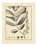Vintage Botanical Study VI