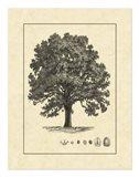 Vintage Tree I