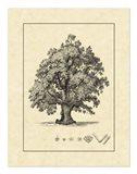 Vintage Tree III