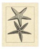 Antique&Deckle Vintage Starfish I