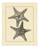 Antique&Deckle Vintage Starfish II