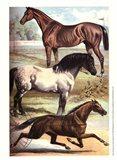 Johnson's Horse Breeds I
