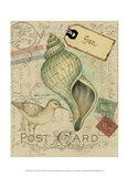 Postcard Shells II