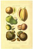 Fruits and Nuts I