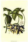 Exotic Foliage III
