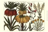 Printed Arena Botanical I