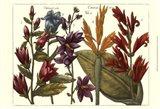 Printed Arena Botanical III