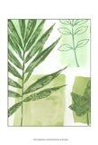 Leaf Impressions I