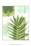 Leaf Impressions II