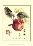 Petite Tuscan Fruits I