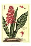Fleur De Rouge I