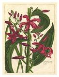 Fleur De Rouge III