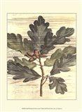 Small Weathered Oak Leaves I
