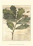 Small Weathered Oak Leaves II