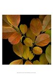 Small Vivid Leaves I
