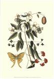 Sm Catesby Butterfly&Botan. III (P)