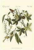 Native Plants II