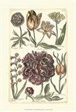 Floral Bounty V