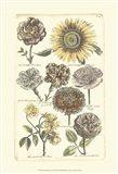 Floral Bounty VI
