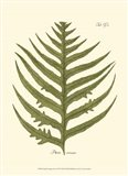 Small Antique Fern VIII