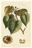 Small Seasonal Foliage I