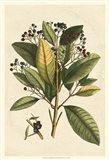 Small Seasonal Foliage IV
