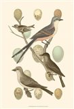 British Birds and Eggs I