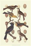 British Birds and Eggs IV