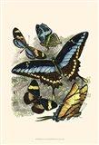 Butterfly Sanctuary II