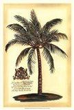 British Colonial Palm III