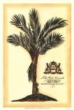 British Colonial Palm IV