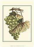 Vintner's Varieties I