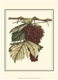 Vintner's Varieties II