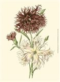 Blushing Blossoms IV