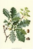 Acorns & Foliage I