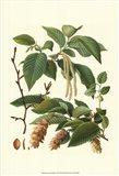 Pincecones & Foliage I