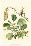 Pinecones & Foliage II
