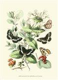 Garden Butterflies I